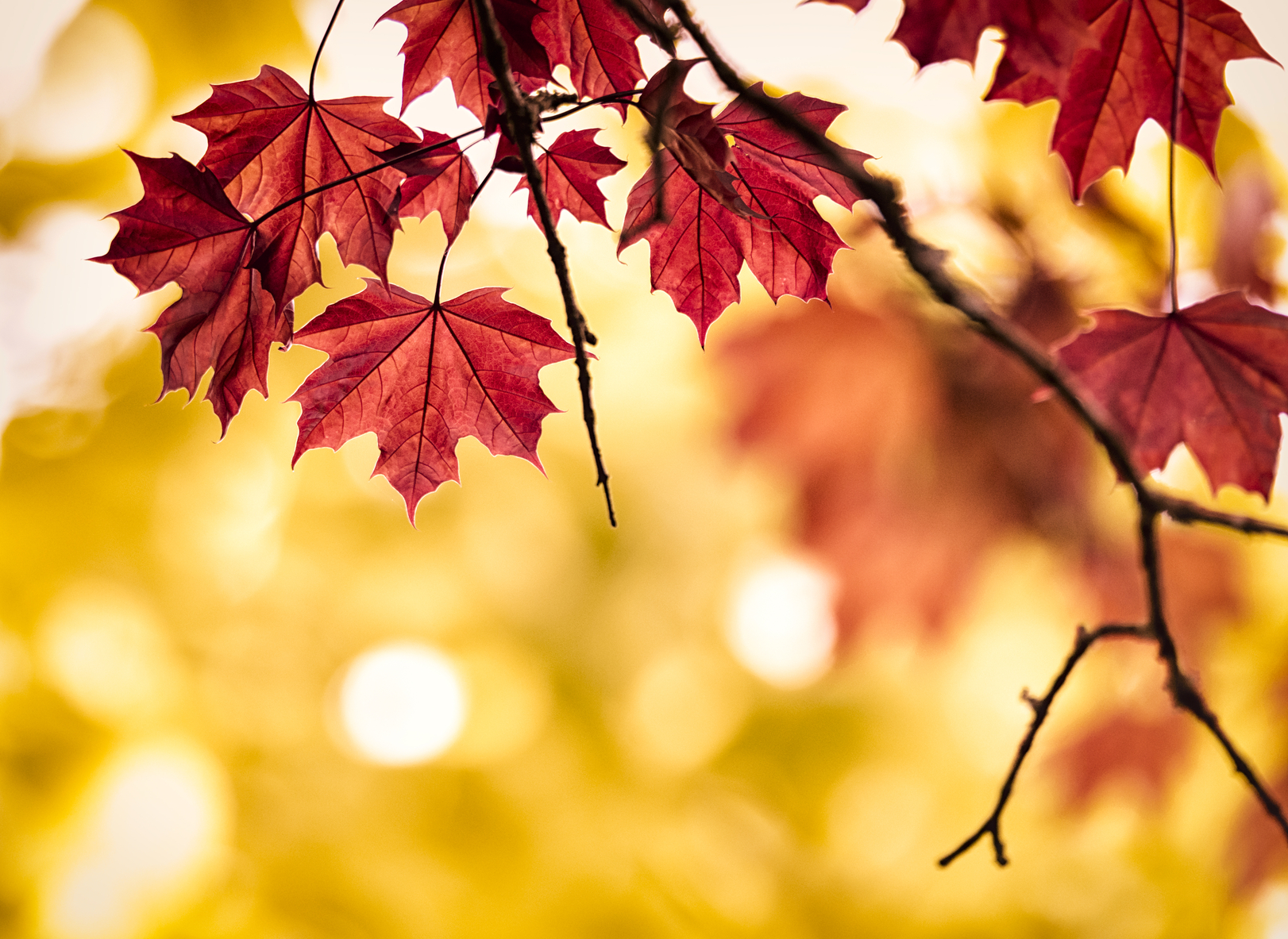 Energy Efficiency Tips for Autumn